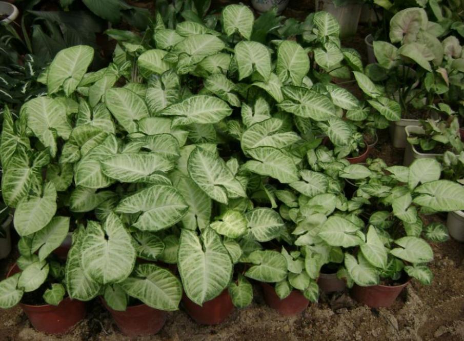 【科普知识】出门常见到的植物名称普及