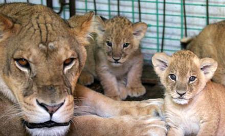 【周末去哪儿】海沧野生动物园——福建省目前唯一的